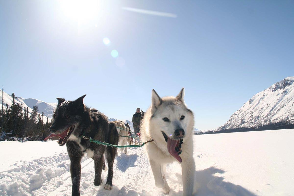 Commercial Truck Sales >> Muktuk Adventures - Dog Sledding Adventures | Yukon ...