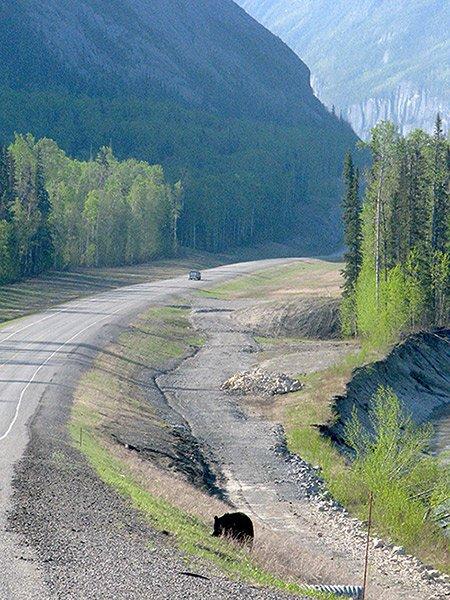 British Columbia Yukon Territory Alaska Northern British Columbia