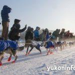 2015-yukon-quest-start-IMG_6733